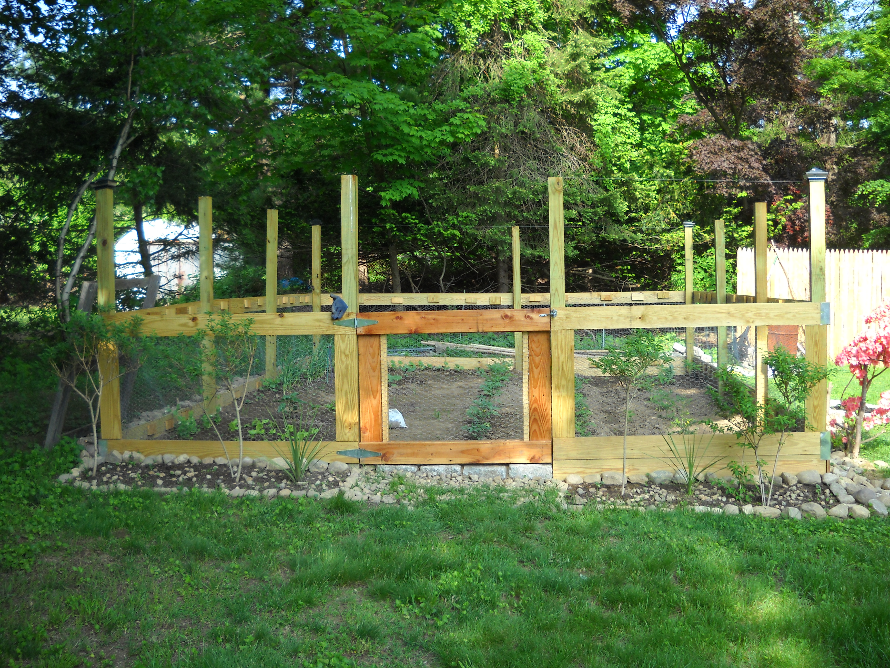 Amazing I Love Fresh Vegetables, But I Hate Gardening And Leave That Up To Mr. D.  And His Mom. So When Mr. D. Wanted To Put Up A Sturdier Fence Around The  Garden, ...